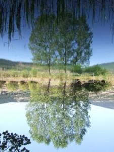 Arbol espejo