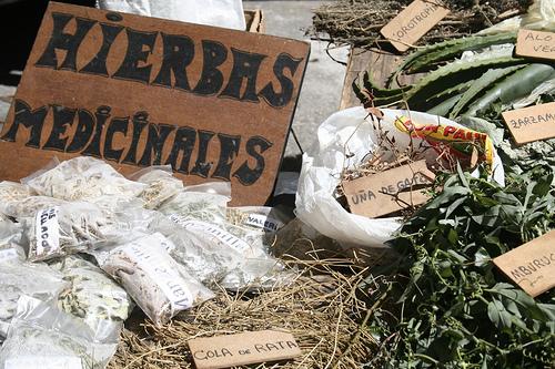 Las hierbas que curan