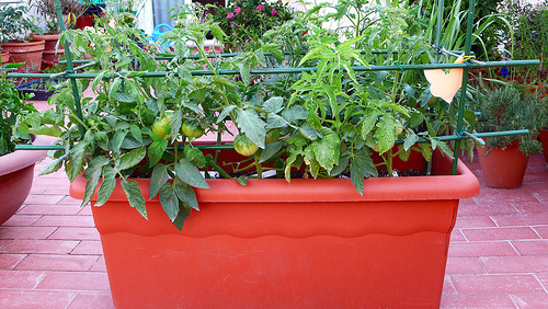 7 consejos para planificar tu huerto urbano - Huerto urbano balcon ...