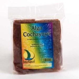 Bolsa de Cochayuyo