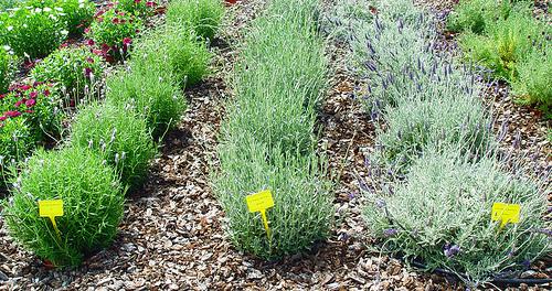 Plantas arom ticas que no falten en tu jard n for Como evitar que salga hierba en el jardin