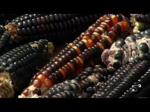 El mundo según Monsanto – Sostenibilidad CinemaSlow