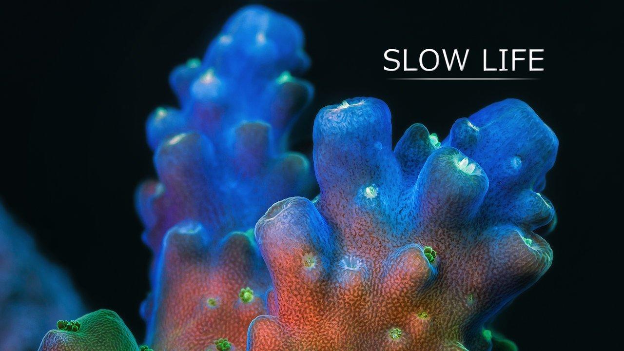 Slow Life – Naturaleza CinemaSlow