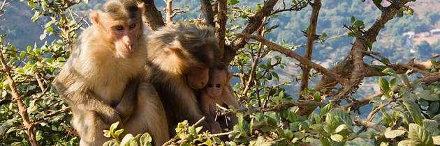 Nuestra mente es como un mono