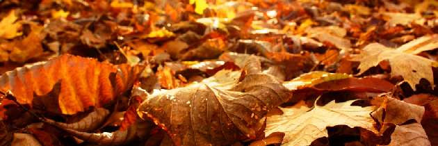 El otoño ya llegó