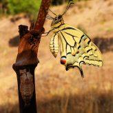 Crecer y aprender, parábola mariposa