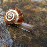 Mindfulness paso a paso…