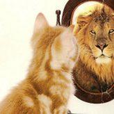 Una sociedad narcisista y competitiva