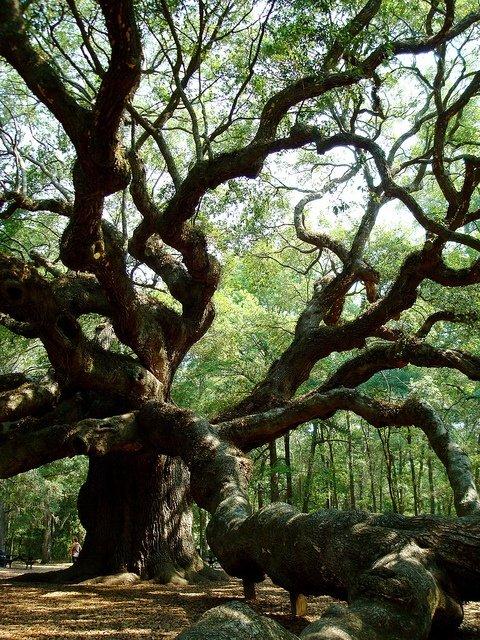 El árbol de los deseos, fábula hindú